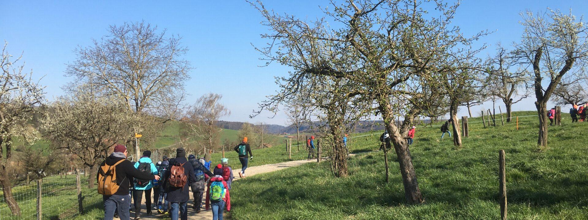 Besuch von Zwetschgenbäumen