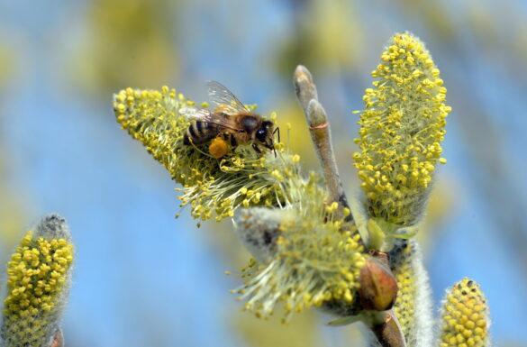 Bienenpfad Laufental