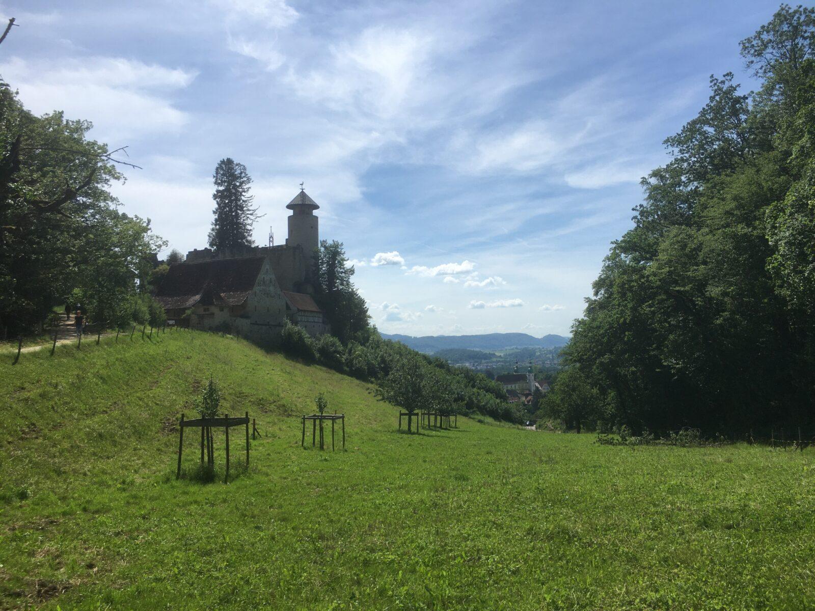 Burg Birseck Sicht Arlesheim