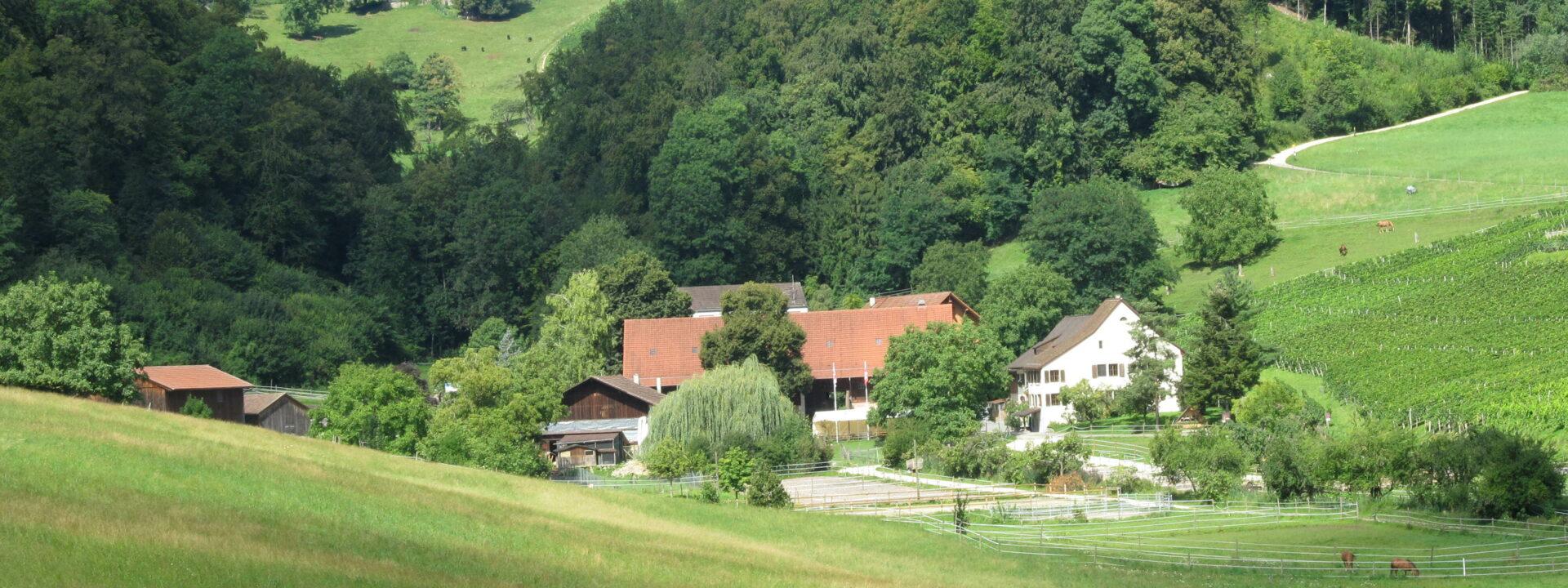 Klushof Koellreuter