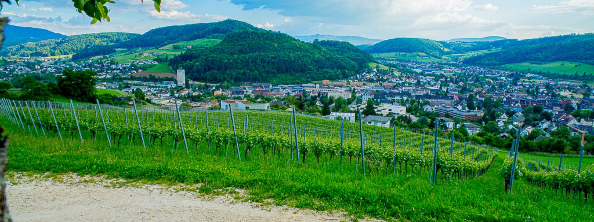 Imhof Wein- und Obstbau