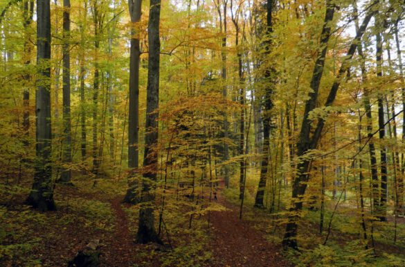 Walderläbnis Gelterkinden