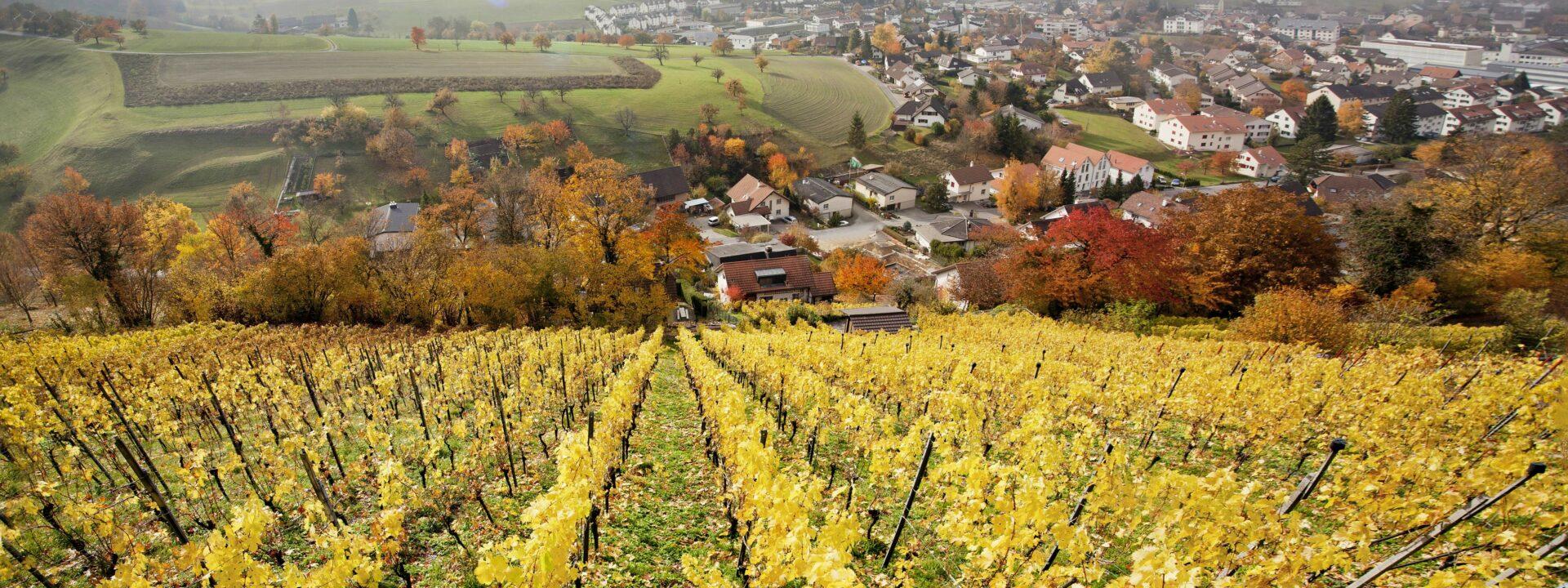 Weinbau & Brennereien
